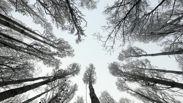 Doğu Anadoluda dondurucu soğuklar etkili oluyor