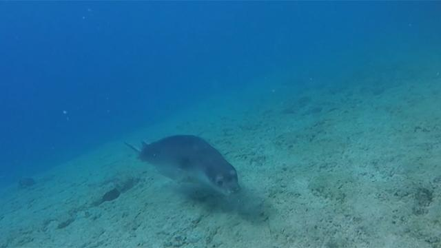 Atlantik Okyanusunda 12 yeni tür keşfedildi