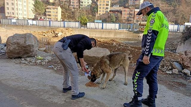 Giresun polisinden sokak hayvanlarına yem ve mama desteği