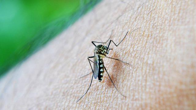 Kuraklıkla yazın beklenen tehlike: Bulaşıcı hastalık taşıyan sivrisinekler