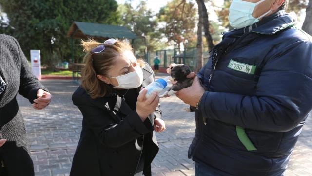 Sokak hayvanları için proje geliştiren belediyeler ödüllendirilecek