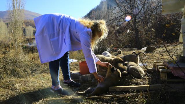 """Engelli köpeğe ve 11 yavrusuna """"koronavirüs savaşçıları"""" sahip çıktı"""