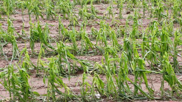 25 milyon dekarlık tarım alanı sigortalandı