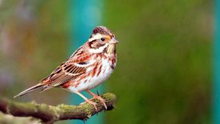 Kuş popülasyonu insan nüfusunun 6 katından fazla