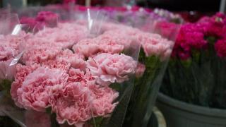 Çiçek sektöründe yüzler gülüyor