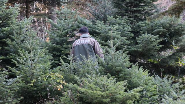 Kırklarelinde ormanda 2 kişinin cansız bedeni bulundu