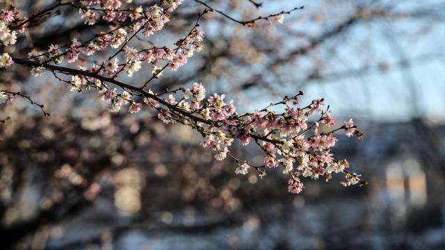 TRT'nin özel içerikleriyle Nevruz Bayramı coşkuyla kutlanacak