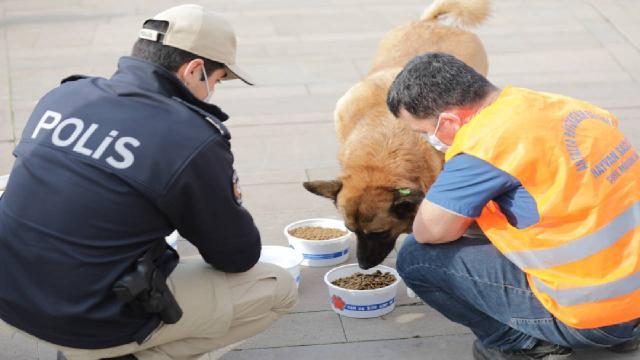 Kısıtlama günlerinde sokak hayvanlarını unutmadılar