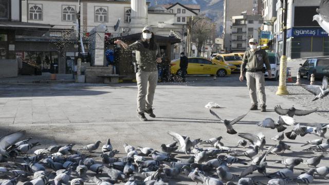 Gümüşhanede sokağa çıkma kısıtlamasında sokak hayvanlarını polisler besliyor