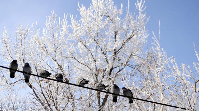 Doğu Anadoluda dondurucu soğuklar yaşamı zorlaştırıyor