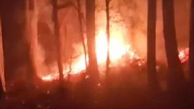 Düzcenin Üvezbeli köyünde ormanlık alanda yangın