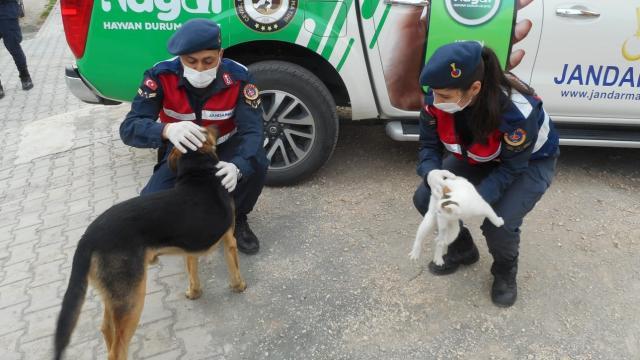 Silifkede jandarmalar sokak hayvanlarını besledi