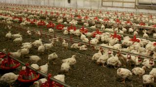 Güney Kore'de 67'nci kuş gribi vakası