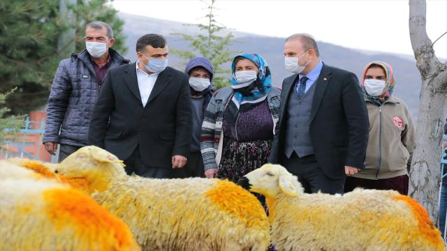 Aksaray Valiliği koyunları telef olan Şerife nineyi sevindirdi