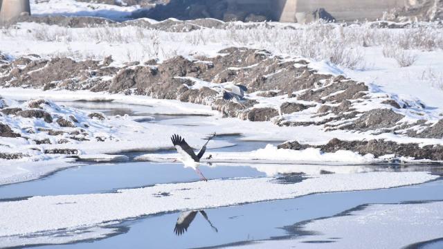 Karstaki sulak alanlar göçmen kuşları ağırlıyor