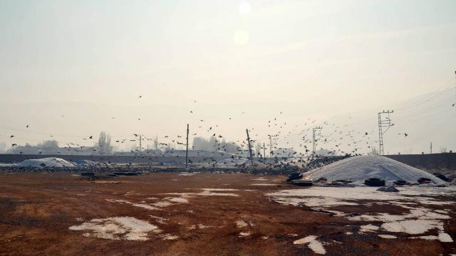 Soğuk havada yem bulamayan kuşlar yem fabrikasına dadandı