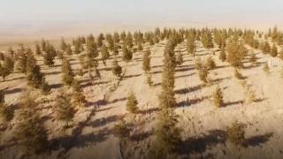 20 yıl emek verdi, boş araziyi ormana dönüştürdü