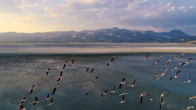 """""""Flamingo ölümlerinin nedeni popülasyon artışı"""""""