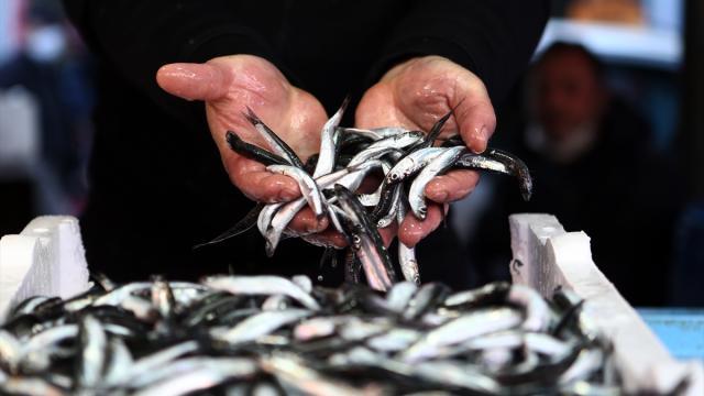 Hamsi avı yasağı 28 Ocaka uzatıldı