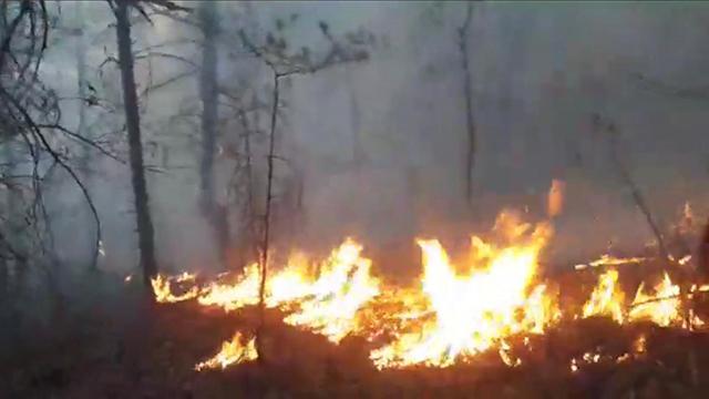 Artvinde ormanlık alanda yangın