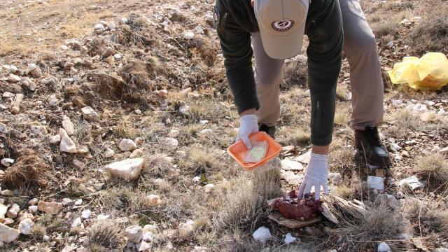 Kırşehirde polis ekipleri, doğadaki yaban hayvanlarına yem bıraktı