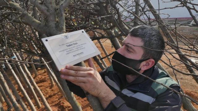 Trabzonda 2020de dünyaya gelen her bebek için bir ağaç