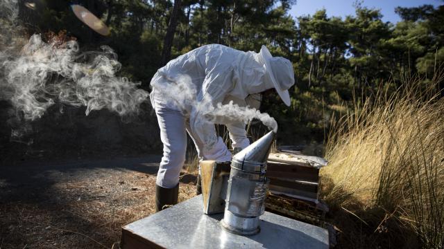Arıcılık ve ipek böcekçiliğine hibe desteği: Başvurular için son gün 22 Ocak