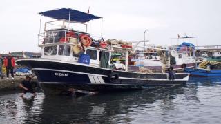 Balıkçılar hamsi avı yasağı sonrası bolluk bekliyor