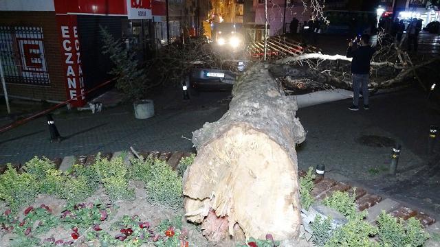 Şiddetli lodos 60 yıllık çınar ağacını devirdi