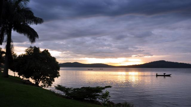Ugandada Viktorya Gölündeki balık ölümleri araştırılıyor