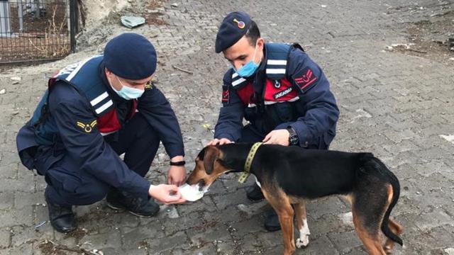 Yaralı köpeği jandarma tedavi ettirdi