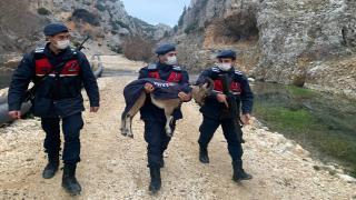 Yavru yaban keçisini montla soğuktan korudular
