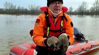 Selde mahsur kalan köpekleri AFAD kurtardı