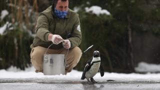 Bursa Hayvanat Bahçesi sakinlerinin karda beslenme keyfi