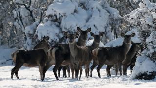 Bursa Uludağ Üniversitesi yerleşkesindeki geyikler için yem bırakıldı