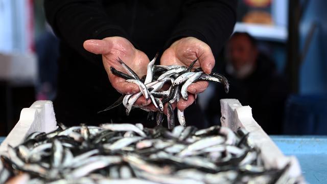 Hamsi avı yasağı 7 Şubata uzatıldı