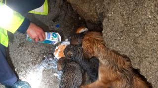 Dere yatağında mahsur kalan köpek ve 4 yavrusu kurtarıldı