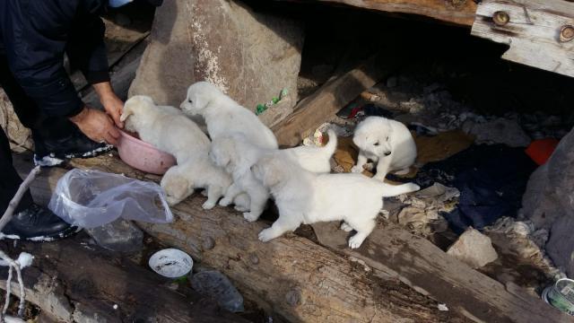 Çorumda sosyal medyadan yapılan çağrıyla 7 köpek yavrusu korumaya alındı