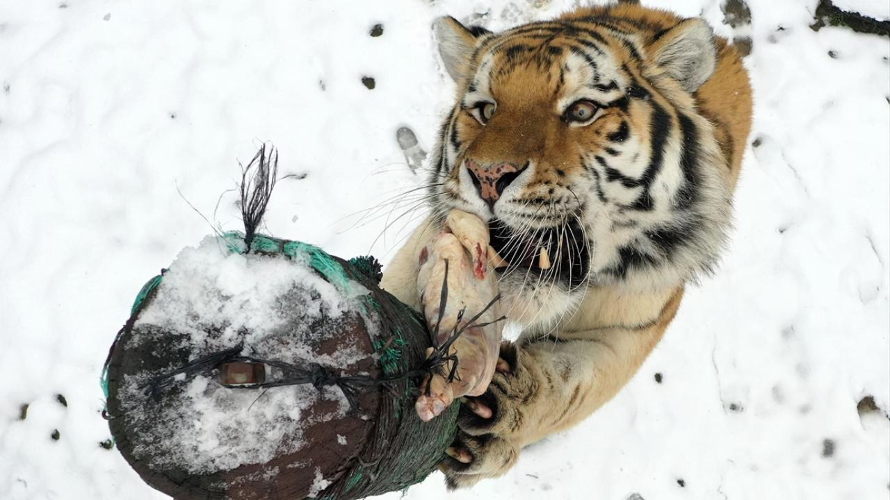 Hayvanat bahçesinde beslenme saati