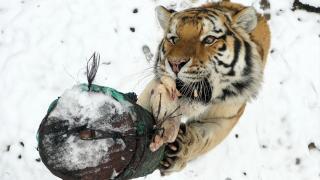 Hayvanat bahçesinde beslenme saati kamerada