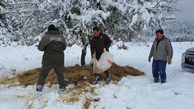 Balıkesir ve Dursunbeyde sokak ve yaban hayvanları için yem bırakıldı