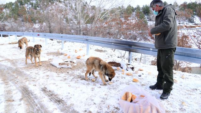 Ankarada sokak ve yaban hayvanları için yem bırakıldı