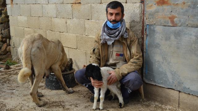 Gaziantepte dişi köpek kendi yavrularının yanı sıra bir kuzuya da annelik ediyor