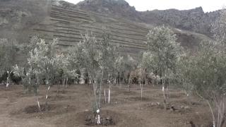 Yusufeli'nin yeni yerleşim yeri için ağaçlandırma seferberliği