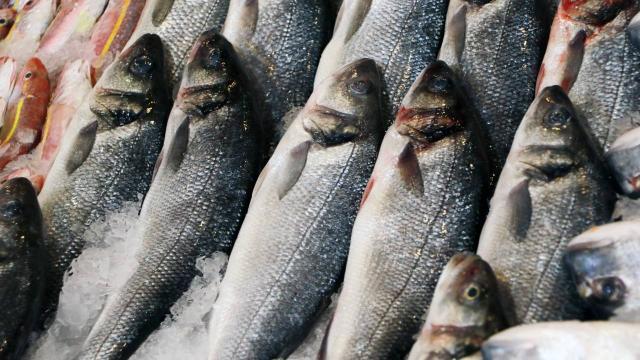 Balıkta büyük hile: Küçük balık yutturup, ağırlığını artırıyorlar
