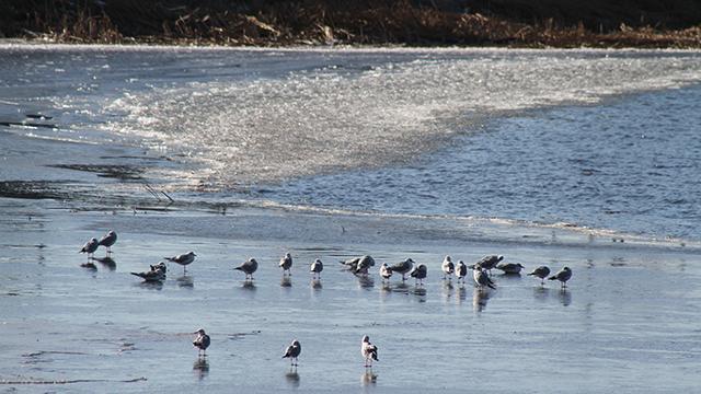 Beyşehir Gölünün bir bölümü buz tuttu
