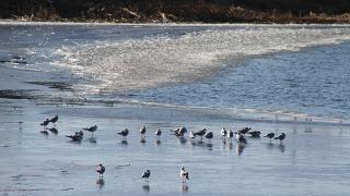 Beyşehir Gölü'nün bir bölümü buz tuttu