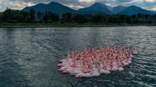 Gediz Deltası'nda kış kuşları kayıt altına alınıyor
