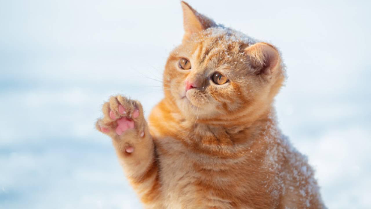 Kedilerin, otizmli çocuklar üzerinde olumlu etkisine rastlandı