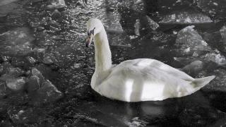 Kuğulu Park buz tuttu